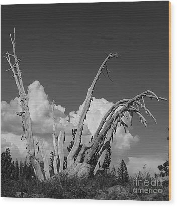 Wood Print featuring the photograph The Remnant by Terry Garvin
