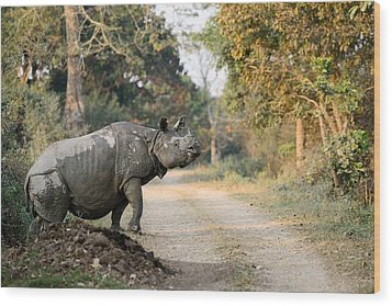 The Rhino At Kaziranga Wood Print by Fotosas Photography