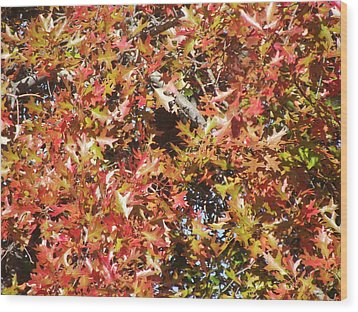 The Rich Reds And Yellows Of Fall Wood Print by James Rishel