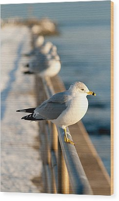 The Ring-billed Gull Wood Print