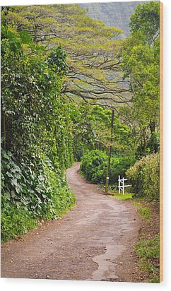 The Road Less Traveled Wood Print by Denise Bird