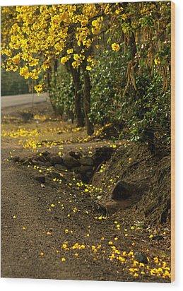 The Road Not Taken Wood Print by Ramon Fernandez