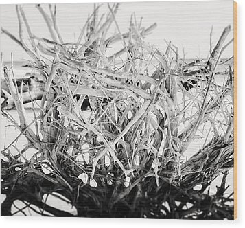 The Roots In Black And White Wood Print by Lisa Russo