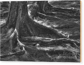 The Roots Wood Print by Sophie Vigneault
