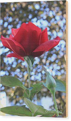 The Rose And Bud Wood Print
