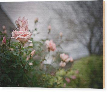 The Rose Garden Wood Print by Linda Unger