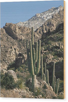 The Rugged Catalina Mountains Wood Print by Elvira Butler
