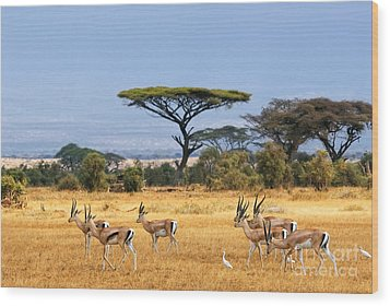 The Safari And Animals Wood Print by Boon Mee