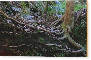 The Salamander Tree Wood Print by Evelyn Tambour
