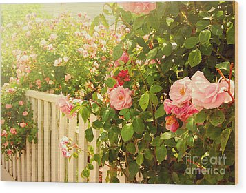 The Scent Of Roses And A White Fence Wood Print