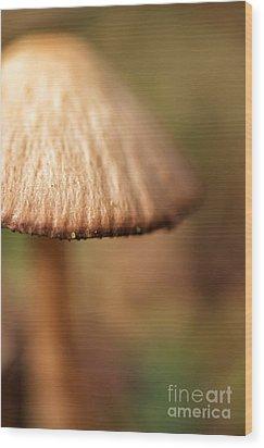 The Secret World Of Shroooms Wood Print by Lois Bryan