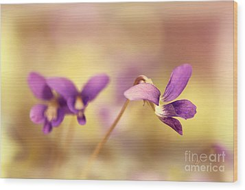 The Secret World Of Wild Violets Wood Print by Lois Bryan