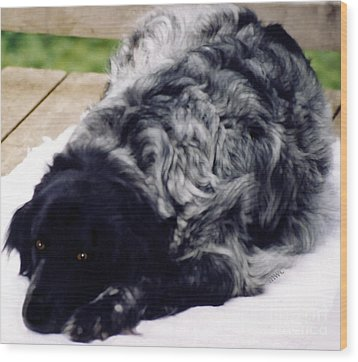 The Shaggy Dog Named Shaddy Wood Print by Marian Cates