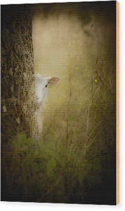 The Shy Lamb Wood Print by Loriental Photography