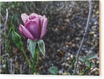 The Solitary One Wood Print by Linda Unger