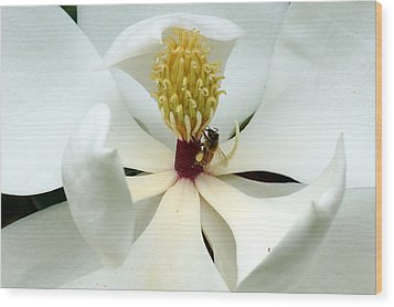 The Southern Magnolia Wood Print by Kim Pate