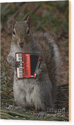 The Squirrel And His Accordion Wood Print