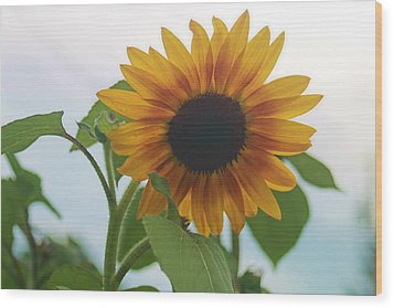 The Sunflower Wood Print by Victoria Sheldon