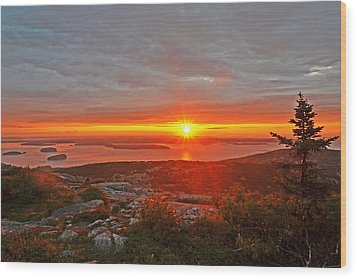 The Sunrise From Cadillac Mountain In Acadia National Park Wood Print