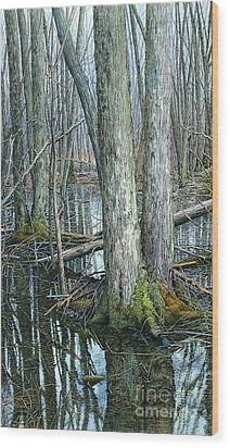 The Swamp 3 Wood Print