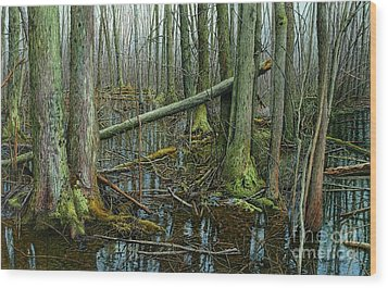 The Swamp 4 Wood Print