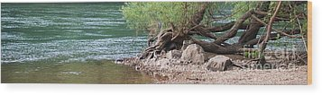 The Tangled Tree Wood Print by Julie Clements