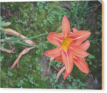 The Tawny Daylily Wood Print by Sonali Gangane