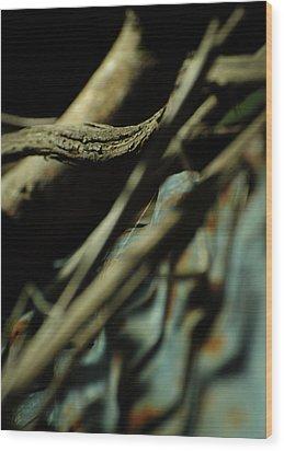 The Thread Wood Print by Rebecca Sherman