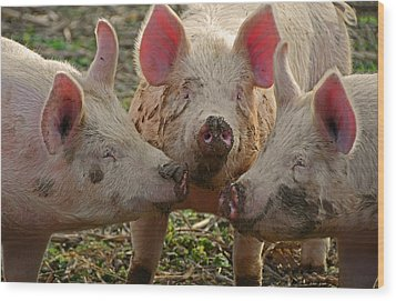 The Three Little Pigs Wood Print by Steven  Michael