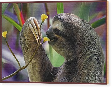 The Three-toed Sloth Wood Print by Gary Keesler