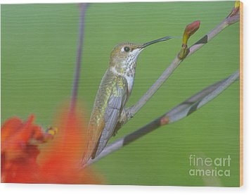 The Tongue Of A Humming Bird  Wood Print by Jeff Swan