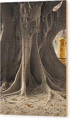 The Tree And The Post Box Wood Print by Mary Machare
