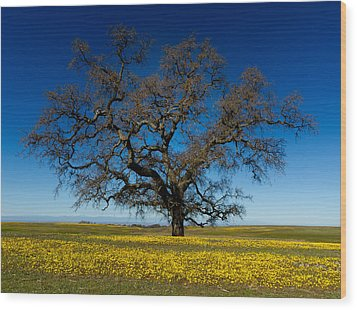 The Tree On Table Mountain Wood Print