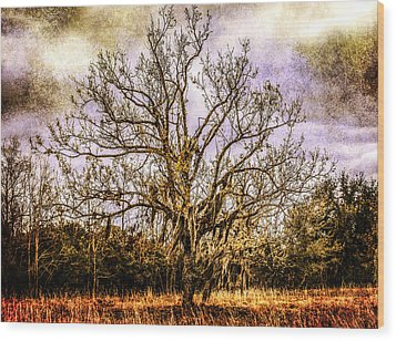 The Tree Wood Print by Steven  Taylor