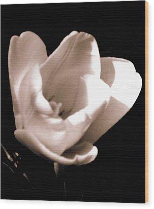 'the Tulip' Wood Print