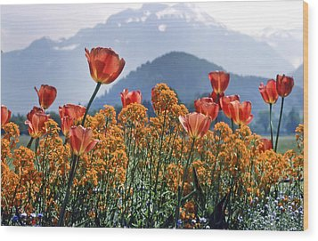 The Tulips In Bloom Wood Print