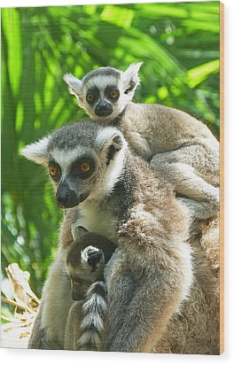 The Twins - Ring-tailed Lemurs Wood Print by Margaret Saheed