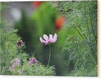 Wood Print featuring the photograph The Warmth Of Summer by Thomas Woolworth