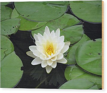 Wood Print featuring the photograph The Water Lilies Collection - 01 by Pamela Critchlow