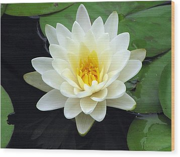 Wood Print featuring the photograph The Water Lilies Collection - 02 by Pamela Critchlow