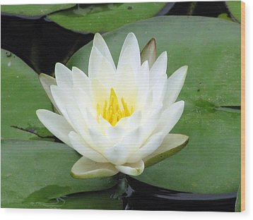 Wood Print featuring the photograph The Water Lilies Collection - 04 by Pamela Critchlow