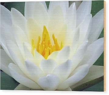 Wood Print featuring the photograph The Water Lilies Collection - 05 by Pamela Critchlow