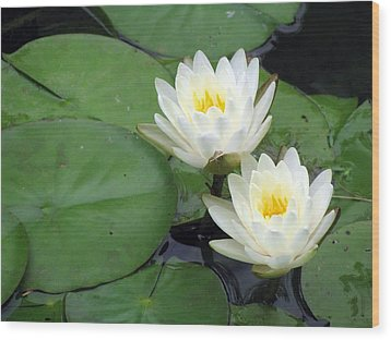 Wood Print featuring the photograph The Water Lilies Collection - 06 by Pamela Critchlow
