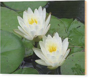 Wood Print featuring the photograph The Water Lilies Collection - 08 by Pamela Critchlow