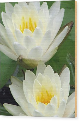 Wood Print featuring the photograph The Water Lilies Collection - 09 by Pamela Critchlow