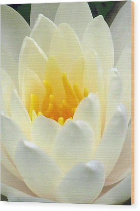 Wood Print featuring the photograph The Water Lilies Collection - 10 by Pamela Critchlow