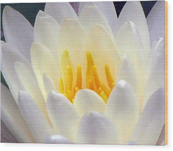 Wood Print featuring the photograph The Water Lilies Collection - 11 by Pamela Critchlow