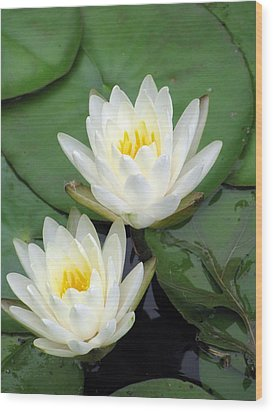 Wood Print featuring the photograph The Water Lilies Collection - 12 by Pamela Critchlow