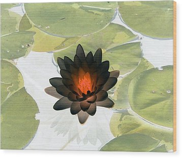 Wood Print featuring the photograph The Water Lilies Collection - Photopower 1034 by Pamela Critchlow