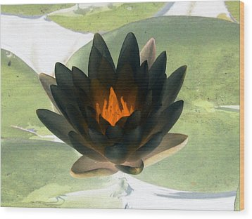 Wood Print featuring the photograph The Water Lilies Collection - Photopower 1037 by Pamela Critchlow